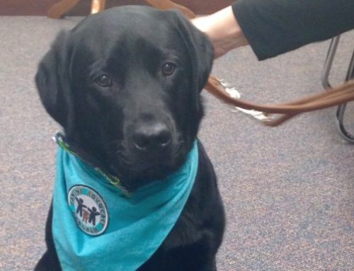 Meet Our Canine Advocate