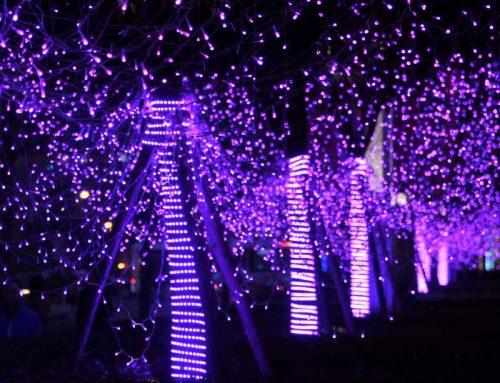 Purple Lights Campaign
