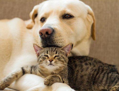 Protecting Victims' Pets